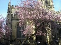 Frühling Oxford