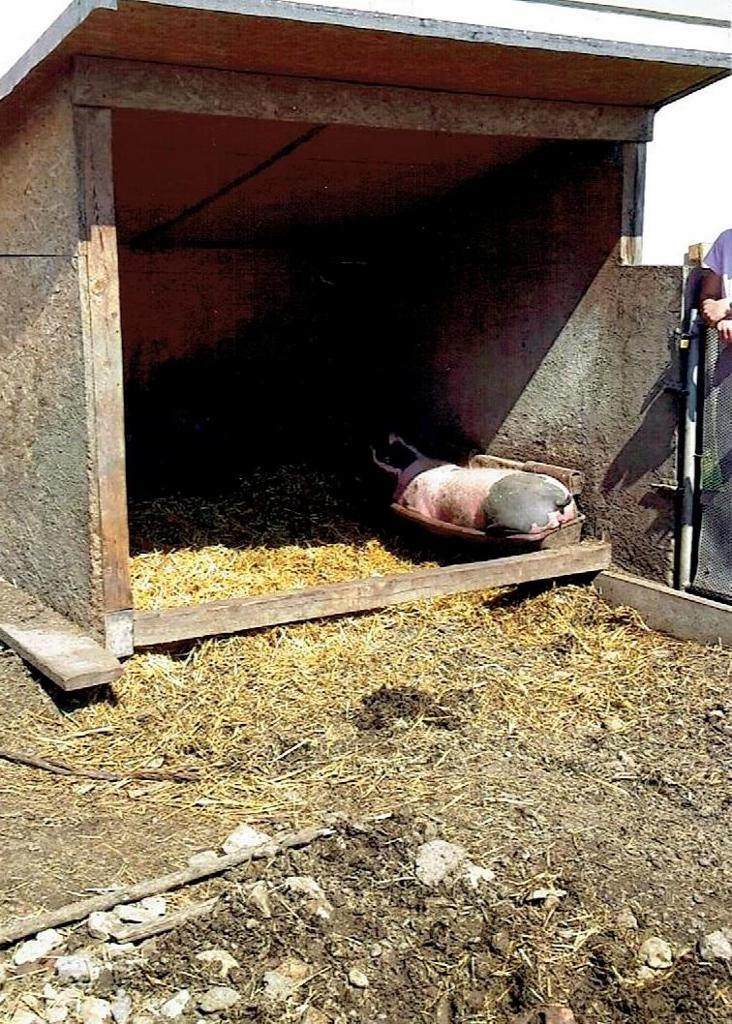 Verschlag Für Schweine Kreuzworträtsel